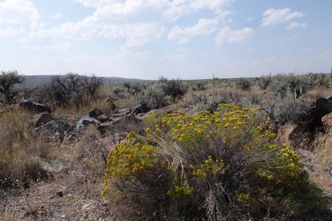 Flowers in the desert.