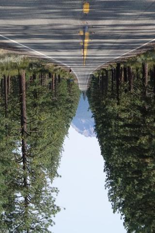 Mountain between trees