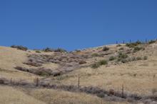 Tumbleweed next to the road